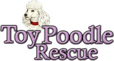 Toy poodle rescue MA