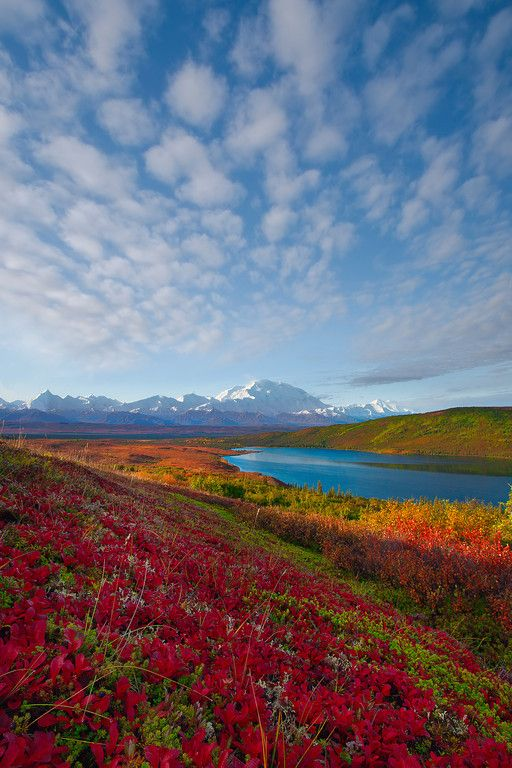 ~~Heading Down To The River Of Color - Denali National Park, Alaska | autumn tundra in Denali | by Kevin McNeal~~