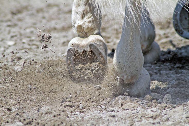 """La forza degli zoccoli by M. Villa - """"Zoccoli di cavallo su un campo in sabbia"""" #countrychic #interiordesign"""