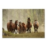Horses cresting small hill during roundup, 2 poster