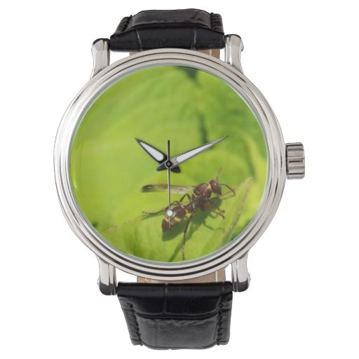 Vespidea paper/Potter wasp watch