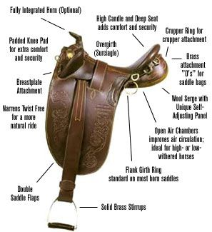 Parts of the Australian saddle these saddles are more comfortable they are a cross between a english and western saddle mostly for trail and endurance rides