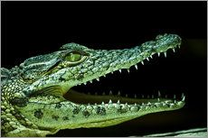Gregor Luschnat - Krokodil