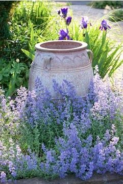 Gammal urna, kantnepeta och irisar vid sandgång.