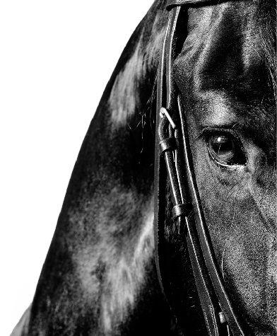 shinning horse