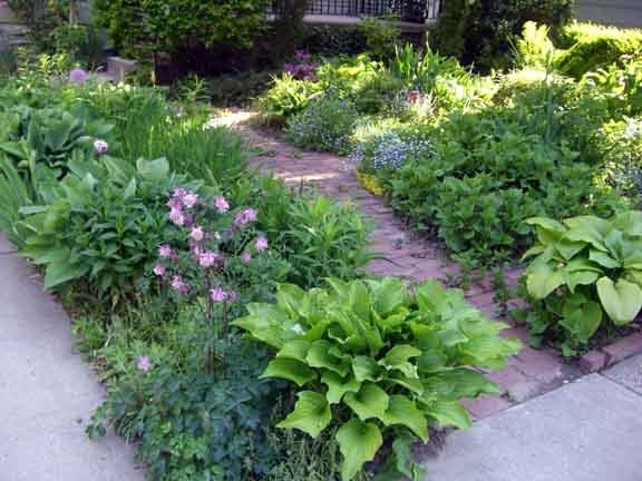 The strip on the left is under planted with grape hyacinths. This row contains hosta, phlox, iris, rudbeckia, chameleon plant, columbine, Russian sage, spring bulbs, allium, perennial geranium, and more, capped off on the far end by a columnar apple tree.