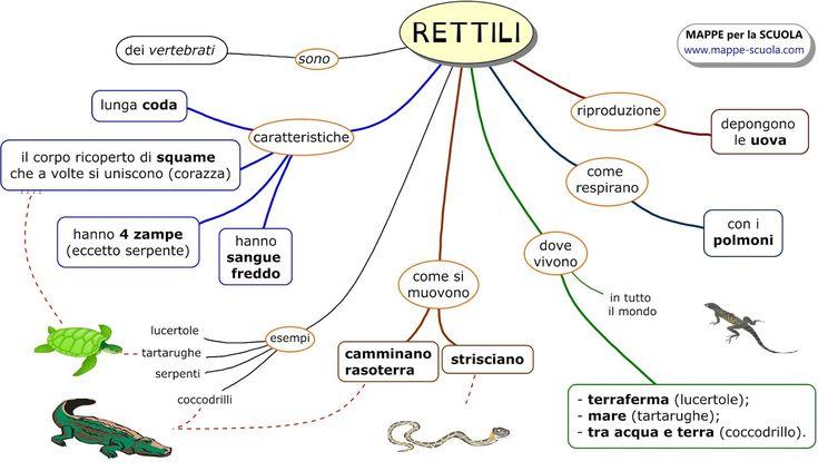 RETTILI+www.mappe-scuola.com+luigi+cattaneo.jpg (1600×921)