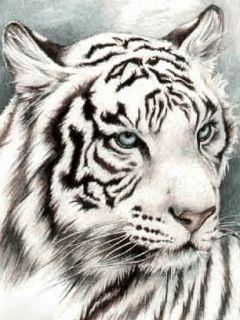 """Desgarga gratis los mejores gifs animados de tigres. Imágenes animadas de tigres y más gifs animados como gracias, ángeles, animales o nombres"""""""
