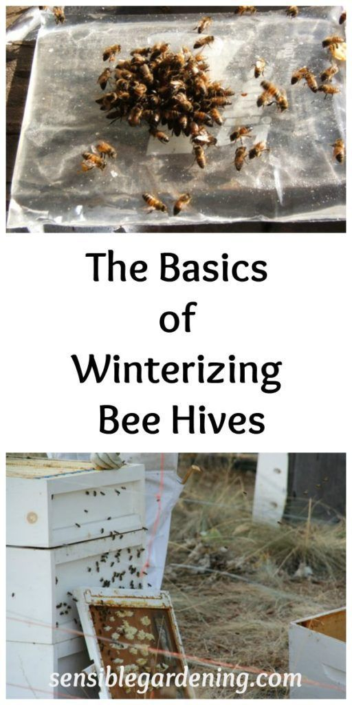 The Basics of Winterizing Bee Hives with Sensible Gardening