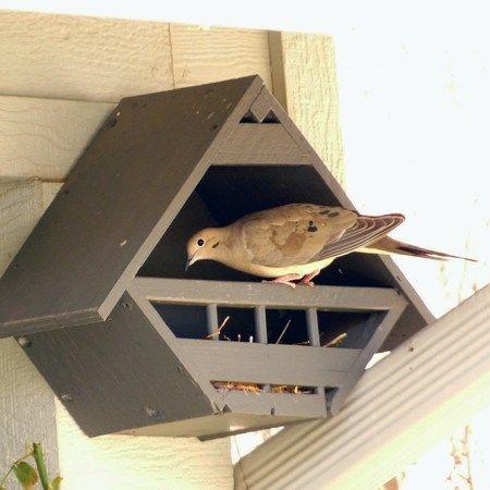 Birdhouse Under Eave02