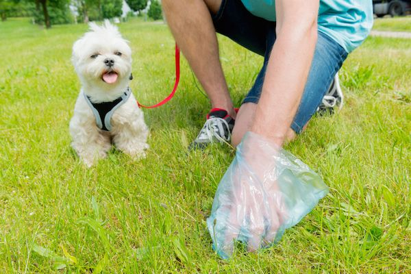 """What Causes Abnormal Dog Stool? 