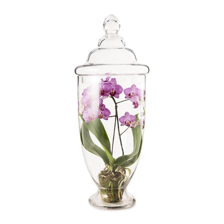 Phalaenopsis in Large Orchid Glass Terrarium - for something to put in your dining table
