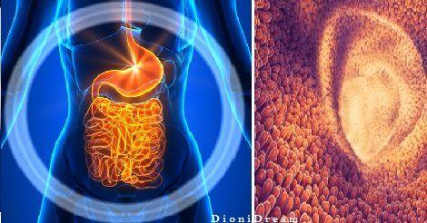 Scienziati: I batteri intestinali possono fermare lo sviluppo del cancro