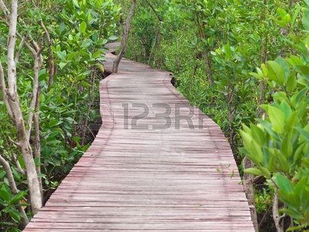 Paseo marítimo a través del bosque de manglar en Laem Phak Bia, Ban Laem, Phetchaburi, Tailandia