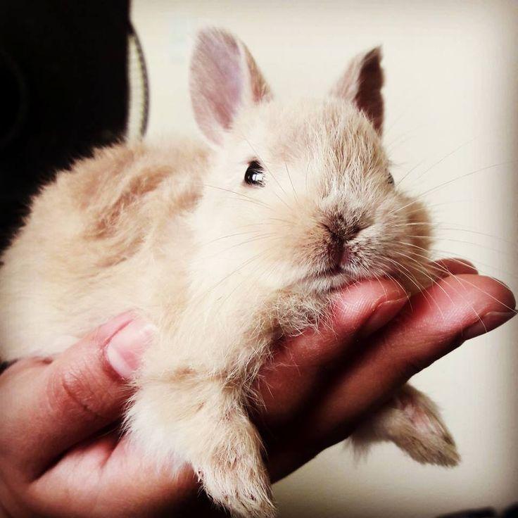 Baby Bun :)