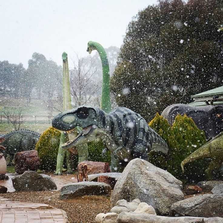 The only thing that is cooler than Canberra covered in snow is Canberra dinosaurs covered in snow! Thanks to canberra.life for sharing this fantastic winter image from the National Dinosaur Museum and tagging #visitcanberra