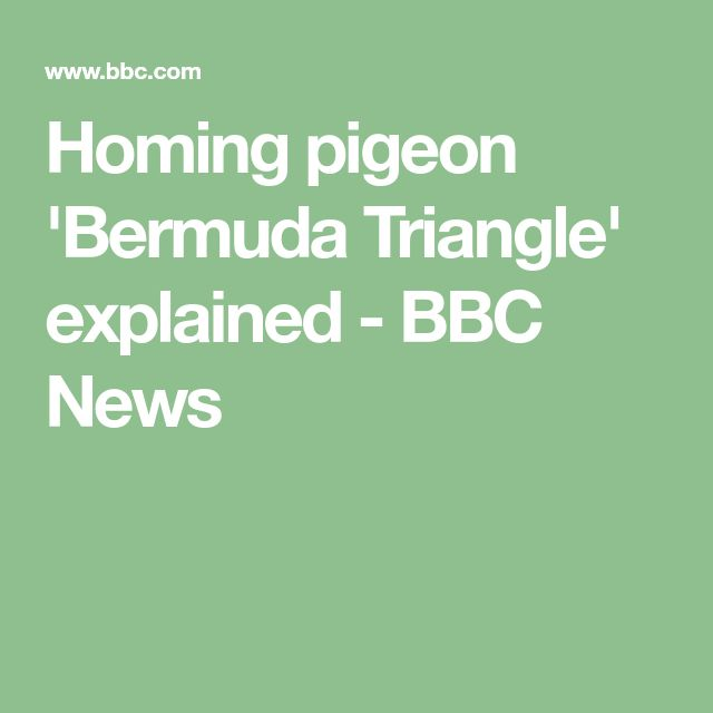 Homing pigeon 'Bermuda Triangle' explained - BBC News
