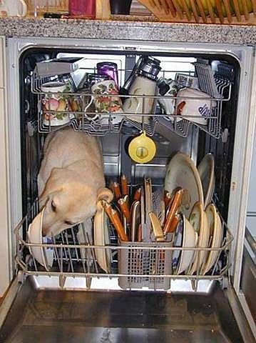 Cute dish washer! : )  This is soo my dog! If she would fit. I constantly have to shoo her from the dishwasher