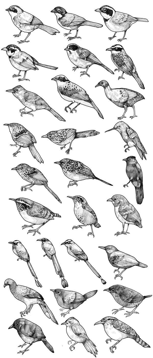 ilustraciones para Libro sobre los Estados y tendencias de la biodiversidad continental de Colombia al 2014 A Book illustrations on states and trends of biodiversity in Colombia 2014