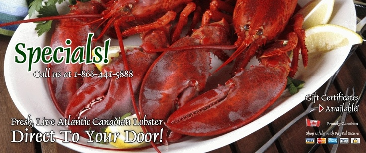 LobsterCanada.com - Live Lobster Delivery Canada - Fresh, Live Canadian Lobster - Shipped Direct from Atlantic Canada and Delivered To Your Door - buy live lobster, lobster gifts delivered, order fresh lobster online