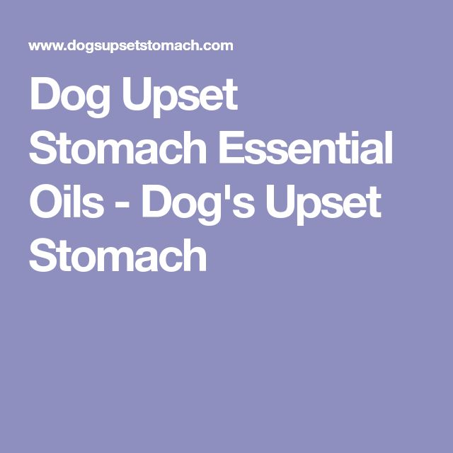 Dog Upset Stomach Essential Oils - Dog's Upset Stomach