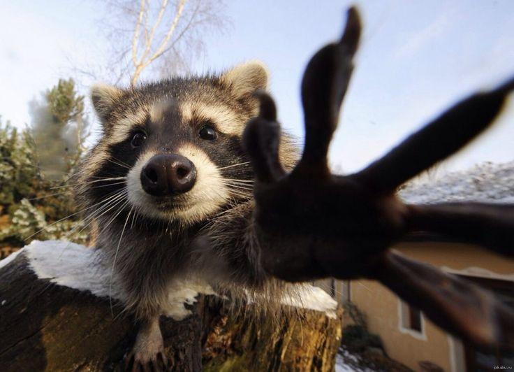 Картинка животного привет