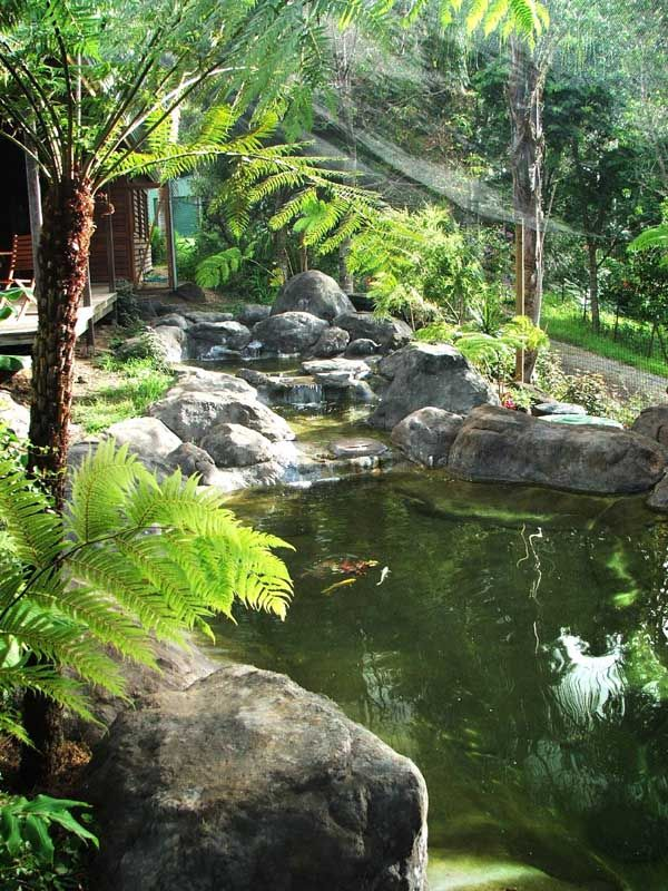 17 best images about pool ideas on pinterest rock for Koi pond from pool