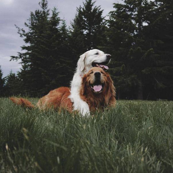 Pin Von Karin Auf Des Menschen Bester Freund Tiere Hund Tiere Und Haustiere Niedliche Hunde
