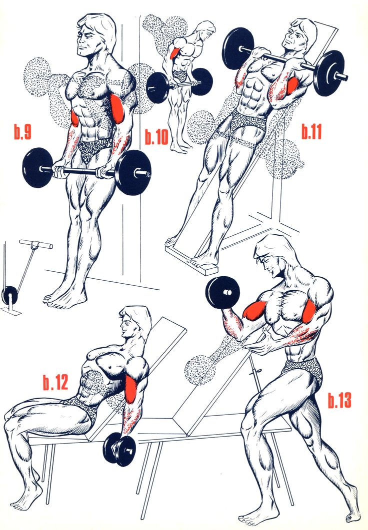 Exercices Biceps - Musculation - FORUM Forme & Sport abdos homme