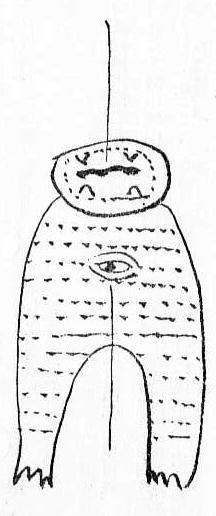 享保十四年(1729) 三月六日、長崎より恠鹿(アシカ)がくる。長崎浦より上り申候恠鹿(アジカ)と申獣の由、長さ九尺三寸、口は頭の処にあり、眼は一つ也、目赤く大さ一尺三寸、腹の処にあり