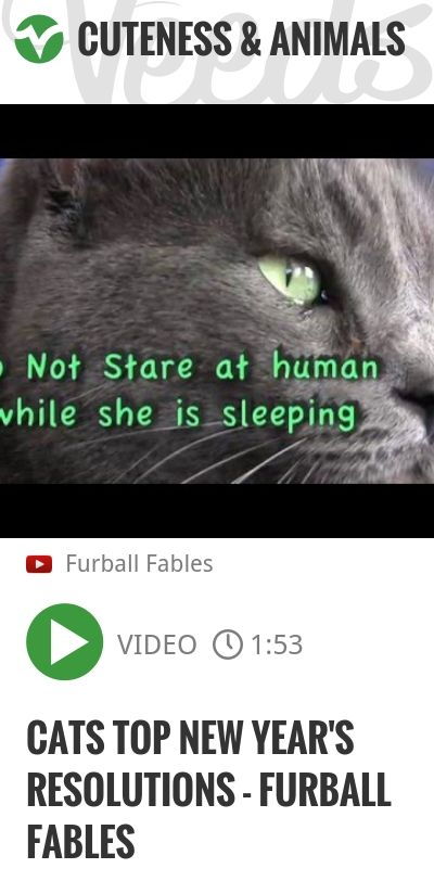 Cats Top New Year's Resolutions - Furball Fables | #cat #happynewyear | http://veeds.com/i/cNQohlTWQLujVQrx/cuteness/