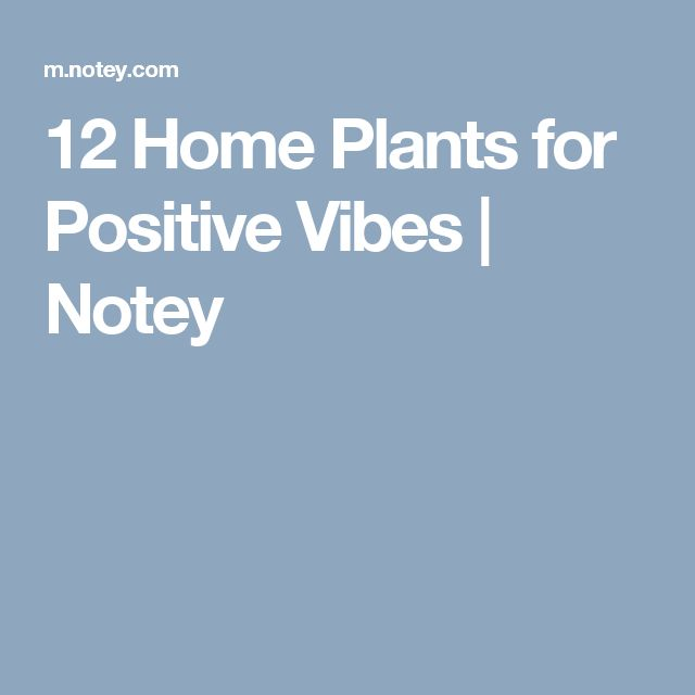 12 Home Plants for Positive Vibes | Notey