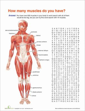Fifth Grade Life Science Word Search Worksheets: Muscle Anatomy