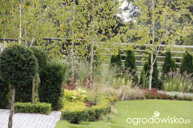 Ogród z lustrem - strona 185 - Forum ogrodnicze - Ogrodowisko