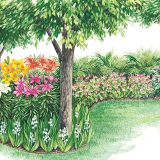 Colorful Shade Garden: A   3 Fernleaf Bleeding Heart B   3 Lady Fern C   10  Hardy Perennial Lilies D   3 Widowu0027s Tears E   6 Lily Of The Valley