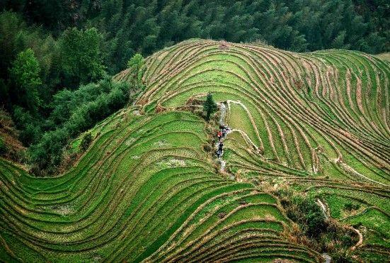 Çin'in hemen her yerinde bulunan teras tarlaları ülkenin hem üretim merkezi hem de çok fazla turist çeken bölgelerinden
