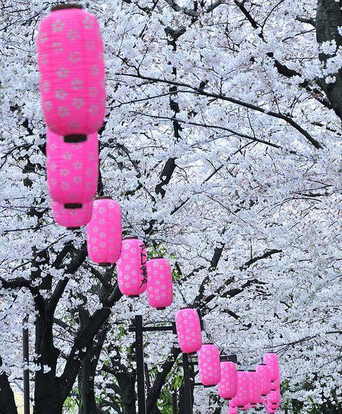 Cherry Blossom Festival, Tokyo, Japan  photo via jessica