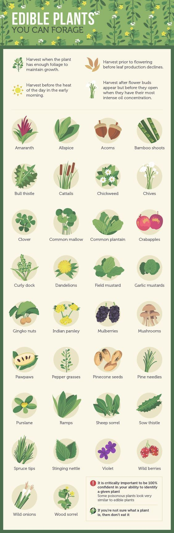 Edible Plants You Can Forage For http://marclanders.com/edible-plants-can-forage/