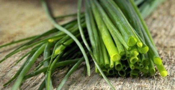 ΚΑΙ ΟΜΩΣ ΔΕΝ ΜΑΣ ΤΟ ΕΧΟΥΝ ΑΝΑΦΕΡΕΙ ΠΟΤΕ! Αυτό είναι το βότανο που μας προστατεύει από τον καρκίνο