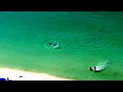 Un requin marteau un peu trop près... [video] - http://www.2tout2rien.fr/un-requin-marteau-un-peu-trop-pres-video/