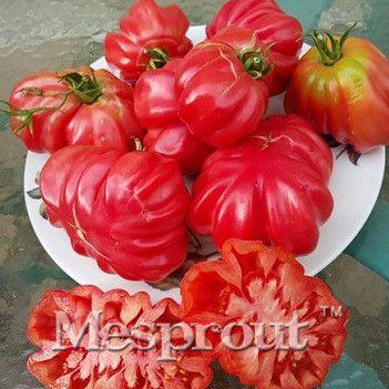100ks - řecké Vzácné Semena rajčat Dědictví Sladký zahrádkářství Semena Rostliny Non GMO osivo zeleniny pro domácí zahrady Výsadba