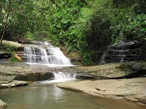 Buderim Forest Waterfall - One of our favourite hideaways in the middle of suburbia.