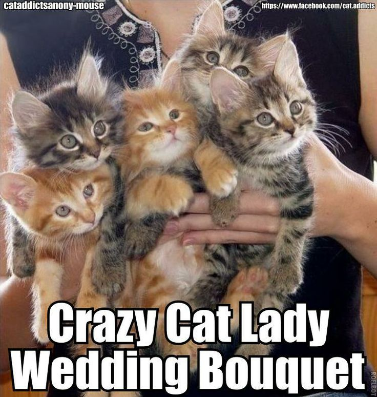 There are people who would think this would make a great bridal bouquet for me. Crazy cat lady ...