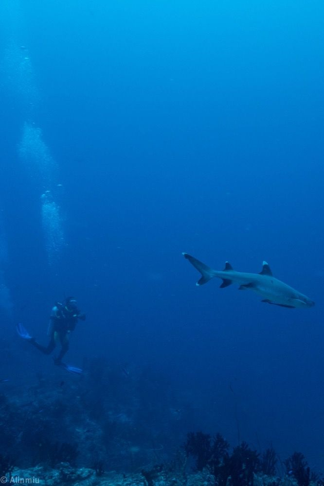 #shark #sharkanddiver #friendlyshark #sharksarefriendsnotfood