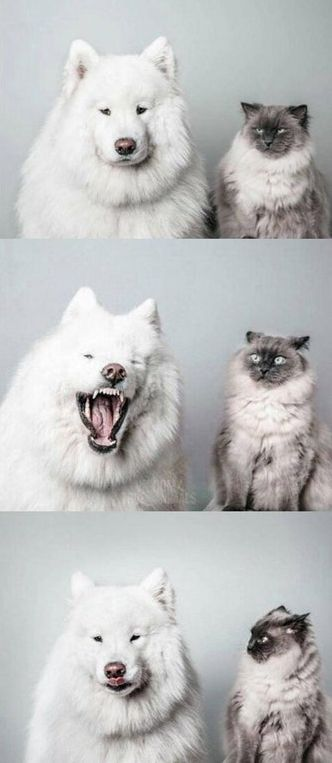 20 funny moments with cats.
