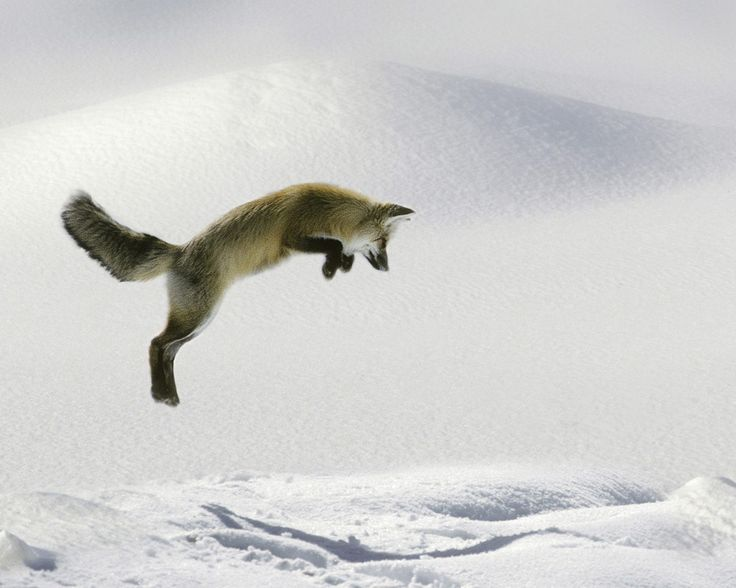 animals in winter - intro activity; use 4-quadrant reveal for noticings/wonderings