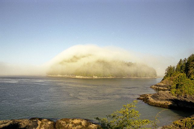 Sea mist clinging to a small wooded island off Tofino, Vancouver Island, B.C.  #Tofino #Uclelet