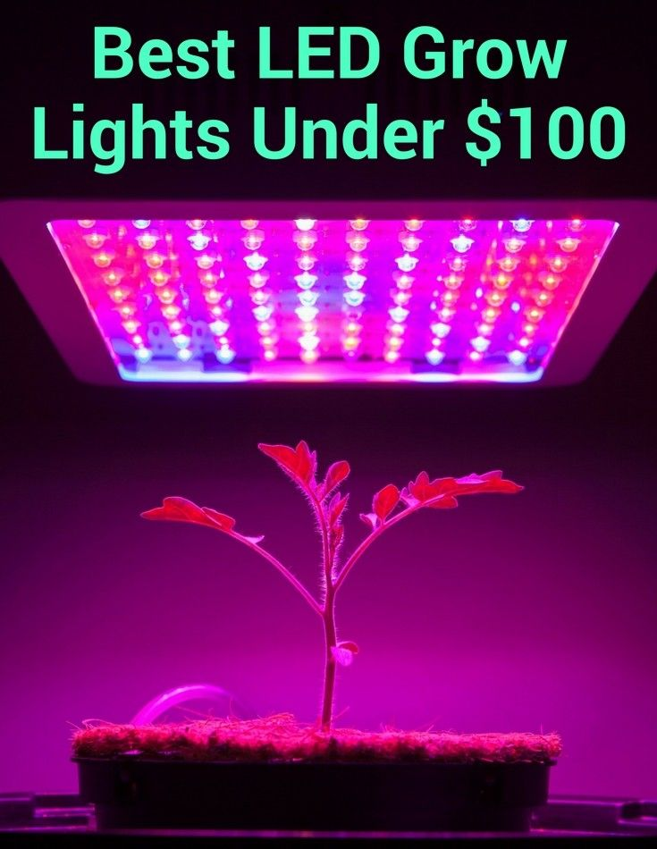 The best LED grow lights under $100. Most lights in this price range are worthless. Find out which few actually perform as promised.
