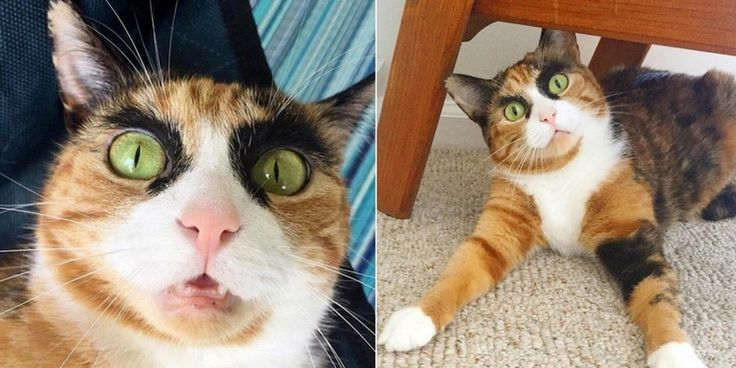 Calico Cat Judges Her Human Everyday with Those Crazy Eyebrows.. (10  Photos)