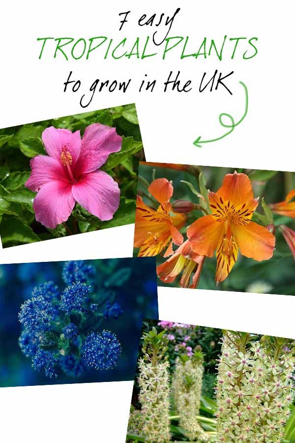 7 Easy Tropical Garden Plants To Grow Your Own Oasis Tropical